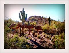 they came - FSQv2 (milomingo) Tags: light shadow arizona cactus southwest art texture phoenix contrast bug insect landscape saturated desert bright outdoor ant hill grain vivid frame them organic saguaro multicolored sonoran photoart arid bold desertbotanicalgarden organicsculpture photoborder