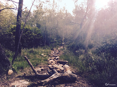 The Rocky Path (gblaxos) Tags: trees sunset sun nature forest rocks ray