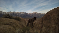 morning view (alanthebox) Tags: california easternsierras alabamahills lumia950