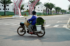 Green machine (Roving I) Tags: street vegetables transport vietnam greens loads danang helmets plasticcontainers motorscooters sunhats conicalhats