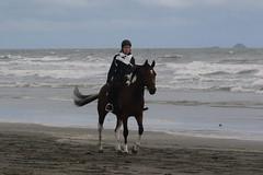 IMG_EOS 7D Mark II201604031664 (David F-I) Tags: horse equestrian horseback horseriding trailriding trailride ctr tehapua watrc wellingtonareatrailridingclub competitivetrailriding sporthorse equestriansport competitivetrailride april2016 tehapua2016 tehapuaapril2016 watrctehapuaapril2016