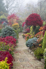 Autumn pathway (Four Seasons Garden) Tags: york uk flowers blue autumn red england mist colour green english leaves yellow stone garden four japanese maple seasons award foliage national paving deciduous winning walsall 2015 yorkstone acers
