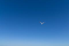 TH20150514A603437 (fotografie-heinrich) Tags: strand himmel mwe ostsee vogel zingst