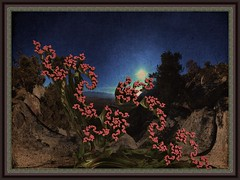 high desert blooms (bloorose-thanks 4 all the faves!!) Tags: abstract art digital 3d render fractal textured photofiltre mandelbulb