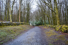 Mooghaun Woods (isaac300k) Tags: travel ireland vacances mar eire traveller viatge cliffsofmoher vacations gaelic holydays irlanda illa barrancs