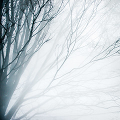 Whiteout (ShutterJack) Tags: winter tree silhouette fog haze branch highkey