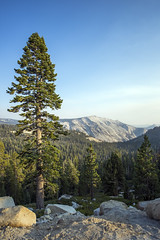 High View (paulabarrickman) Tags: california park trees mountains landscape smoke national yosemite redwoods