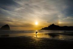 Surfer (Brian Feutz) Tags: oregon coast surfer