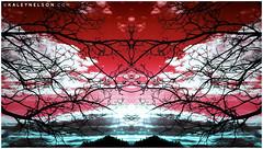Ancestral (kaleynelson) Tags: trees abstract tree nature landscape meditate symmetry mirrored symmetric symmetrical meditation psychedelic spiritual chakra chakras alexgrey sacredgeometry kaleynelson