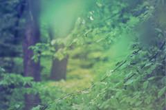 blur-dreamy-texture-texturepalace-68 (texturepalace) Tags: blur color leaves cc creativecommons dreamtextures texturepalace blurtextures