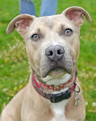 Romeo_03 (AbbyB.) Tags: rescue dog pet newjersey canine shelter adopt shelterpet petphotography easthanovernj mtpleasantanimalshelter