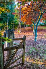 untitled-1 (newbs216) Tags: autumn trees landscape mtwilson