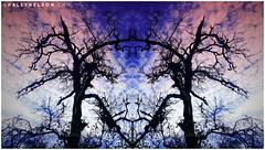 Dance Of The Dragons (kaleynelson) Tags: trees abstract tree nature landscape meditate symmetry mirrored symmetric symmetrical meditation psychedelic spiritual chakra chakras alexgrey sacredgeometry kaleynelson