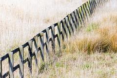 Fence Friday (120/366) (AdaMoorePhotography) Tags: wood uk greatbritain england sun reed grass fence reeds spring nikon sunny gb essex rainham rspb 366 200500mm rainhammarshes d7200
