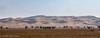 _DSC1900 (Al Mazyed) Tags: الزلفي نفود alzulfi الثويرات