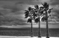 Weather-beaten palms (theseustroizinian) Tags: sunset sea sky phoenix clouds canon palms landscape seaside gulf corinth hellas palm greece corinthian loutraki seasunandclouds canoneos700d