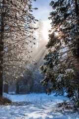Good Morning Starshine (Pismopup Photography) Tags: winter light sunstar filteredlight verticallandscape