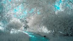 02.07.16 (Adriene Hughes) Tags: landscape monkey sandiego infrared seafoamgreen whitetrees lifepixel canon5dmarkii sandiegocanyon
