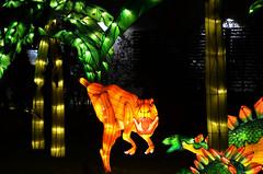 Dinosaur Lantern 1 (pokoroto) Tags: autumn canada calgary night zoo october dinosaur alberta lantern 10 2015     kannazuki   themonthwhentherearenogods 27