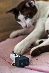 05 (= ann =) Tags: cat toy photostory yotsuba danbo danboard nyanboard