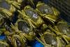 Lau Fau Shan market (Keith T. Wong) Tags: fish hongkong market seafood laufaushan
