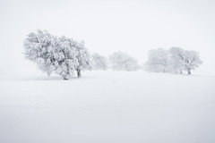 Cold World (andywon) Tags: winter white snow cold tree ice germany deutschland alone brave lonely freiburg schwarzwald blackforest bold beechtree schauinsland