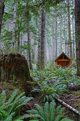 Maison Dans Foret (Flortography) Tags: wood house green nature washington cabin northwest earth hut land terre pacificnorthwest wilderness foret verte pcnw
