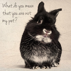 Confused Bunny (Jeric Santiago) Tags: pet rabbit bunny animal conejo confused lapin hase kaninchen   rabbitbit