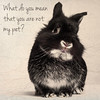 Confused Bunny (Jeric Santiago) Tags: pet rabbit bunny animal conejo confused lapin hase kaninchen うさぎ 兎 rabbitbit