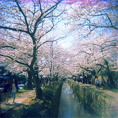 kyoto (thomasw.) Tags: 120 japan analog holga asia asien cross sakura nippon mf expired crossed