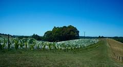 Neuseeland Nelson 2015 (Originalverkorkt) Tags: new nelson zealand