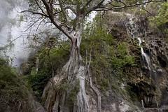 El Guardin de Tolantongo (ramosblancor) Tags: naturaleza nature water mxico landscape agua paisaje steam ficus tropical vapor humidity hotsprings hidalgo aguastermales humedad grutasdeltolantongo