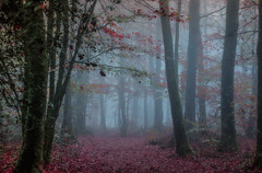 In the forest! (pat.thom974) Tags: trees red fog forest canon atmosphere