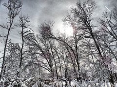 Trees (iluvgadgets) Tags: trees winter blackandwhite snow explore medford intothesun 52weeksofphotography giveusyourbestshot 522016week4