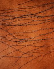 Old Vine, Campanilla Compound – Santa Fe, NM (studioferullo) Tags: abstract newmexico santafe texture vine minimalism
