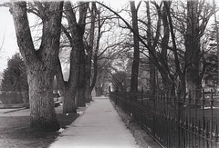 Black and White Film Capitol Grounds, Carson City, NV (melody_hoover) Tags: trees blackandwhite film nv carsoncity captiol