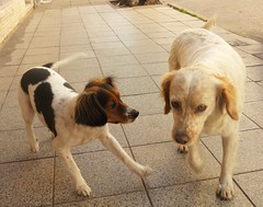 Manón and her friend (Sonia Gobato) Tags: street friends argentina cane funny play sweet perro salto sonia mirada femaledog femmina