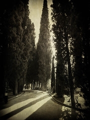 Light in the Garden (Colormaniac too (trying to catch up)) Tags: travel trees light sun sunlight texture monochrome garden landscape outside blackwhite spain afternoon shadows monotone textures alhambra granada andalusia distressed flypaper