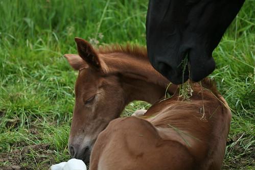 Horses Insight  (3)