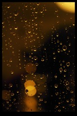 printemps belge..... (Leopoldo Esteban) Tags: brussels belgium belgique bruxelles bruselas belgica leopoldoesteban belgianspring printempsbelge belgischelente primaverabelga