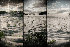 Paysage neige (pitchoun9999) Tags: neige paysage triptyque