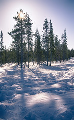 Spring Sun over Snowy Forest (ZeroOne) Tags: trees winter sky snow cold nature backlight forest finland landscape lapland backlit epl3