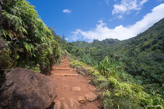 Climbing out of Hanakapiai (Mark Griffith) Tags: hawaii hiking hike northshore kauai napalicoast dayhike kalalautrail dawnpatrol 20160414dsc04354