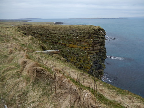 Cliff of fulmars by Duncansby Head car-park