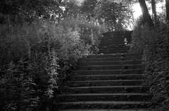 stairs, 2 (Vygintas R.) Tags: park city light summer bw film stairs rangefinder 35mmfilm lithuania vilnius 2012 lietuva kodaktmax100 leicam4 žirmūnai nikoncoolscan5000 kodak100tmax zirmunai 0074n12