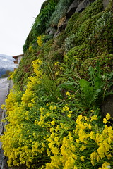 Bressanone (Luciana.Luciana) Tags: giallo fiori altoadige brixen bressanone neveschnee sudtirol