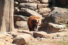 IMG_7820 (neatnessdotcom) Tags: new york city ny canon eos rebel zoo bronx ii di tamron vc 550d f3563 t2i pzd 18270mm