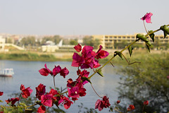 Nature (cpt_ahmed93) Tags: flower nature aswan nileriver