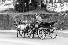 Corre, corre caballitoooo... (Jo March11) Tags: blancoynegro portugal canon caballos monocromo lisboa sintra canoneos calesa monocromático cochedecaballos ieletxigerra idoiaeletxigerra eletxigerra