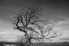 Somerset Levels (TB IMAGES) Tags: trees blackandwhite canon landscape mono somerset 1785mm levels 550d